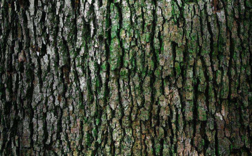 Piękny oraz {zadbany zieleniec to nie lada wyzwanie, w szczególności jak jego konserwacją zajmujemy się sami.